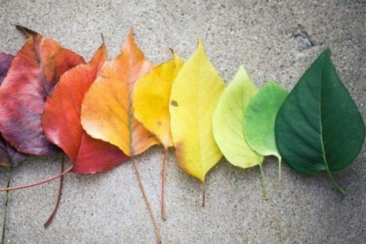 Change Leaves