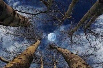 Spln v znamení Panny marec 2020 AnteAr