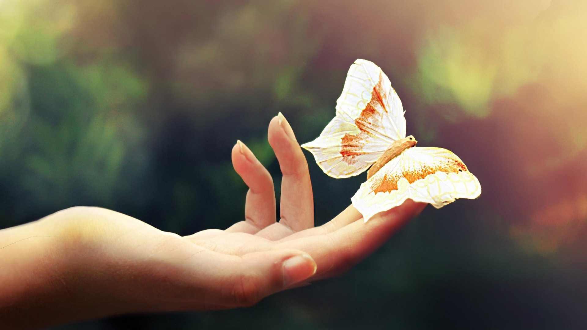 Karma v horoskope - motýľ na dlani AnteAr