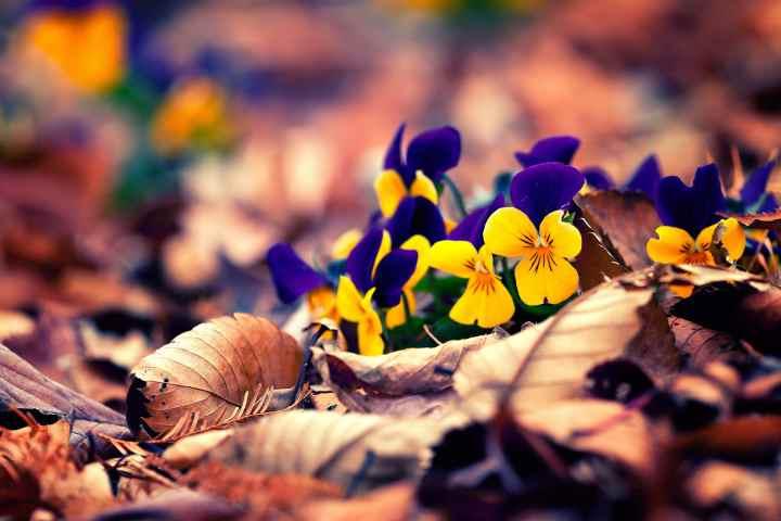 Príroda kvety lístie jeseň AnteAr